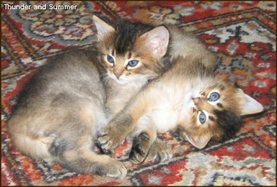 Summer and Thunder, September 2004 (5wks old)